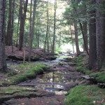 Frost Gully Brook